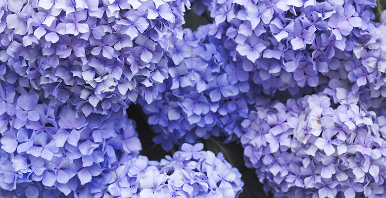 Meaning of The Color Purple  760e5b7ae